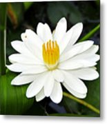 White Wonder Metal Print