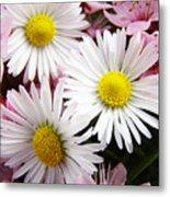 White Yellow Daisy Flowers Art Prints Pink Blossoms Metal Print