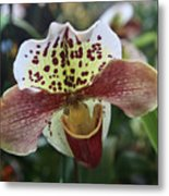 White Yellow Speckled Metal Print
