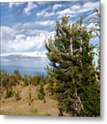 Whitebark Pine Trees Overlooking Crater Lake - Oregon Metal Print