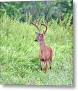 Whitetail Deer 4 Metal Print