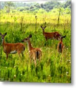 Whitetail Deer Family Metal Print