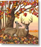 Whitetail Deer - Hilltop Retreat Metal Print by Crista Forest