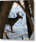 Whitetail Deer Threw The Trees Metal Print