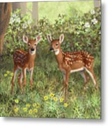 Whitetail Deer Twin Fawns Metal Print