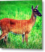 Whitetailed Deer Metal Print