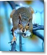 Who Are You Looking At? Metal Print