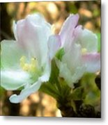 Who Here Has Seen Apple Blossoms In Late Summer Metal Print