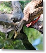 Who Is That I See Staring At Me Metal Print