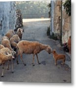 Who Is The Boss Metal Print