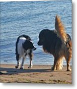 Who Ruffled Your Feathers Metal Print