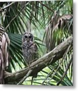 Whoooo Are You Metal Print by April Wietrecki Green