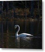 Whooper Swan Of Liesilampi 5 Metal Print
