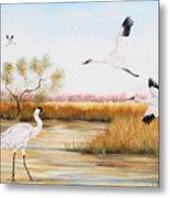 Whooping Cranes-jp3151 Metal Print