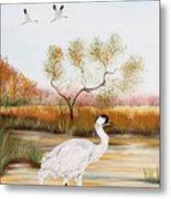 Whooping Cranes-jp3152 Metal Print