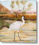 Whooping Cranes-jp3156 Metal Print