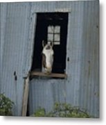 Who's There Metal Print