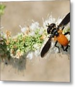 Why Fly Metal Print