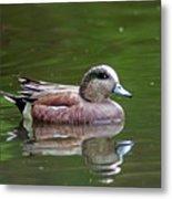 Widgeon Duck Metal Print