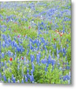 Wild About Wildflowers Of Texas. Metal Print