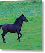 Wild And On The Go Metal Print