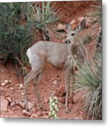 Wild And Pretty - Garden Of The Gods Colorado Springs Metal Print