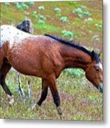 Wild Appaloosa Stallion Metal Print