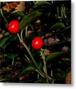 Wild Berries Metal Print