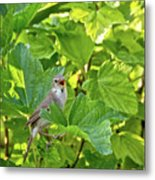 Wild Bird In A Currant Bush. Metal Print