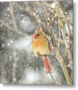 Wild Birds Of Winter - Female Cardinal In The Snow Metal Print