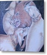 Wild Boar And Dogs Metal Print