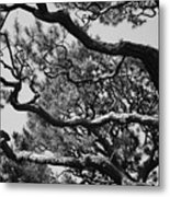 Wild Branches Metal Print