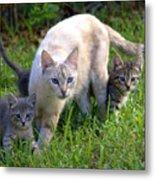 Wild Cats In Hialeah Metal Print