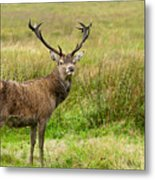 Wild Deer Animals   Metal Print