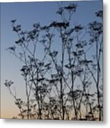 Wild Dill Silhouette Metal Print