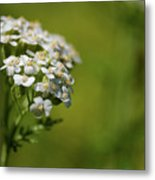 Wild Field Flowers Metal Print