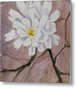 Wild Flower On The Rocks Metal Print