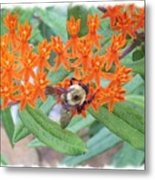 Wild Flowers And Bumble Bees Metal Print