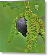 Wild Fruit Metal Print