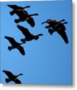 Wild Geese In The West Metal Print