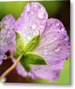Wild Geranium After The Rain Metal Print