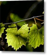Wild Grape Leaves Metal Print