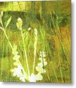 Wild Grass 7 Metal Print