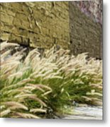 Wild Grass Along An Alley Wall Metal Print