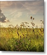 Wild Grass And A Lonely Cloud Metal Print