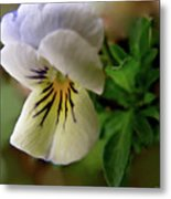 Wild Ground Flowers Metal Print