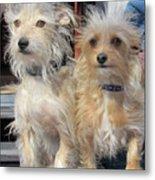 Wild Hair Dogs Metal Print