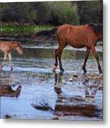 Wild Horse And Foal Cross Salt River Metal Print