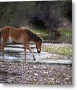 Wild Horse Crosses Salt River Metal Print