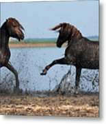 Wild Horse Fight Metal Print